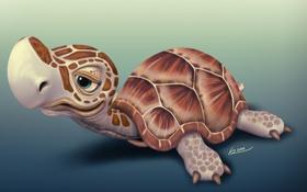 Обои черепашка, маленькая, P_O_R__Turtle