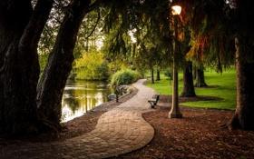 Обои деревья, парк, река, фонарь, аллея