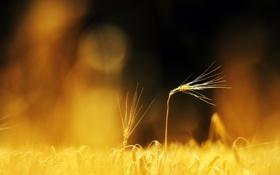 Обои поле, макро, природа, фото, фон, обои, растения