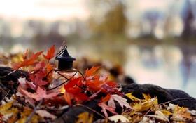 Картинка осень, листья, ветки, природа, свеча, желтые, фонарь