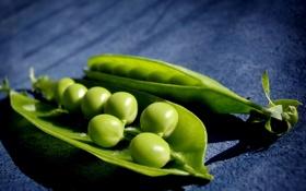 Обои горошек, macro, peas, зеленый, горох, макро