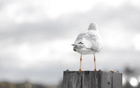 Картинка чайка, хвост, прикол, помет