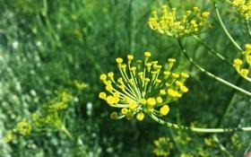Обои цветок, Природа, лето, макро, утро