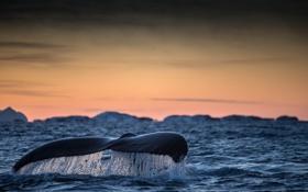 Картинка море, природа, киты