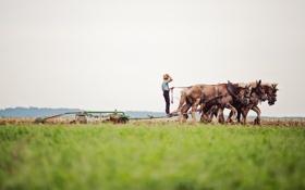 Обои поле, работа, человек, кони, пашня