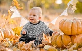 Картинка листья, мальчик, осень, радость, тыквы, ребёнок