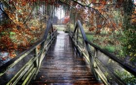 Картинка мост, парк, река, дождь