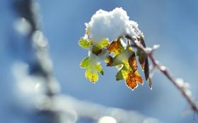 Обои снег, свет, ветка
