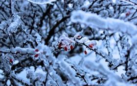 Обои зима, ягоды, лёд
