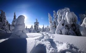 Природа зима снег дорога деревья