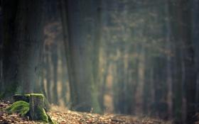 Обои лес, фото, мох, пень, день, forest, photo