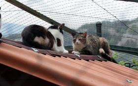 Обои крыша, лето, коты, приятели