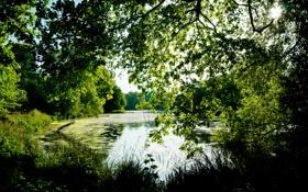 Картинка лето, трава, листья, деревья, озеро, пруд, парк