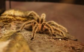 Обои дома, паук, майкал