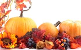 Картинка осень, цветок, листья, ягоды, малина, подсолнух, черника