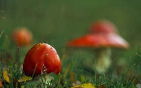 Обои осень, природа, грибы