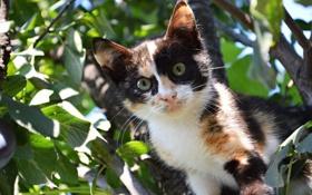 Обои листва, котёнок, на дереве
