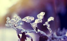 Картинка холод, лед, растение, льдинки