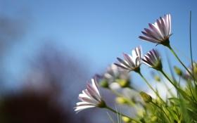 Обои небо, трава, цветы, природа, растения, лепестки, grass