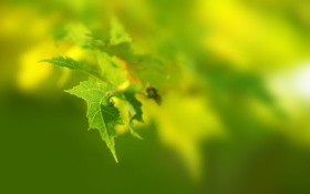 Обои природа, макро, листья, ветки, фото