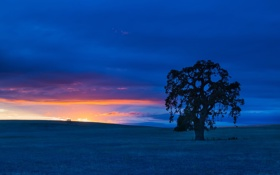 Обои закат, Калифорния, California, San Benito County, Сан-Бенито, поле, дерево