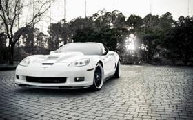 Обои свет, деревья, черно-белый, Chevrolet, белая, corvette, zr1