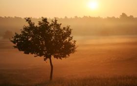Картинка поле, лето, природа, туман, фото, дерево, утро