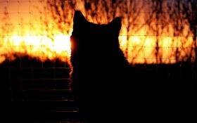 Обои кошка, кот, закат, сетка, голова, вечер, силуэт