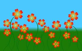 Обои небо, трава, цветы, лепестки