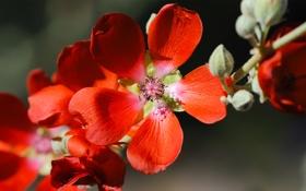 Картинка макро, цветы, ветка, лепестки, красные