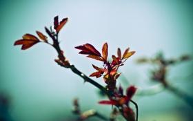 Обои грусть, листья, куст, весна