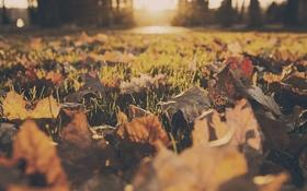 Картинка осень, трава, листья, желтый, листва, оранжевый. красный