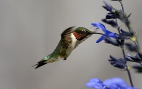 Обои птица, цветок, природа