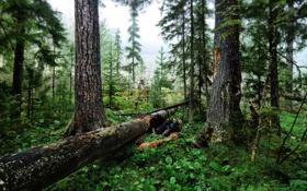 Картинка лес, трава, зелень, обои, деревья, картинка, природа