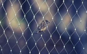 Картинка животные, сетка, птица, забор, крылья, клюв, воробей