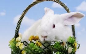 Обои цветы, корзина, кролик, пасха, easter