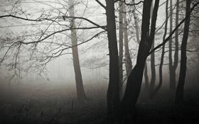 Картинка осень, лес, деревья, ветки, природа, туман, дерево