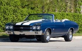 Картинка синий, фон, Chevrolet, Шевроле, кабриолет, кусты, 1970