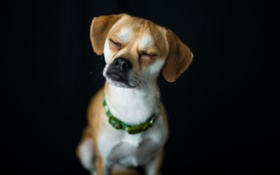 Картинка дом, фон, собака