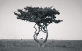 Обои дерево, ч/б, внутри, by Robin de Blanche, Tree Hug
