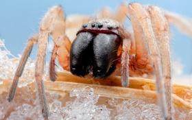 Картинка spider, legs, eyes, fang, mandibles