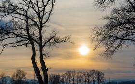 Обои деревья, закат, провода