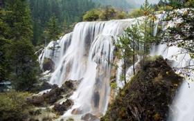 Обои forest, trees, water, waterfall