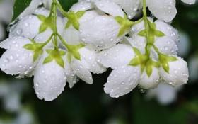 Обои цветы, роса, капли воды
