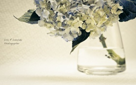 Картинка макро, Цветы, ваза