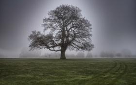 Картинка трава, туман, дерево