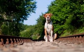 Обои друг, собака, железная дорога