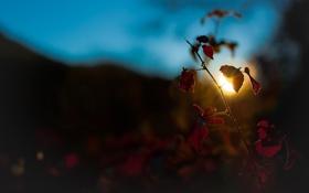Обои солнце, макро, природа, фото, растение, растения, вечер