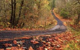 Обои листья, лес, осень, кусты, деревья, дорога