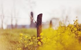 Картинка лето, цветы, природа, забор